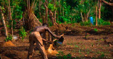 ReDIAL Project's Soil Fertility Improvement Component